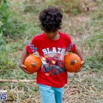 J&J Produce Pumpkin Picking Bermuda, October 14 2017_6143