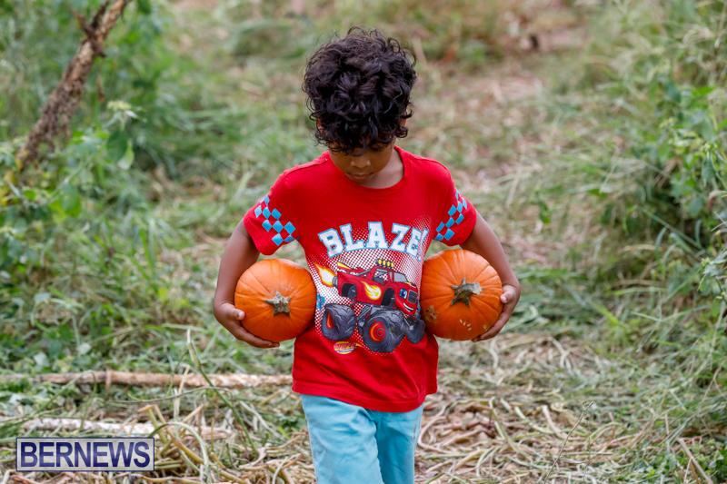 JJ-Produce-Pumpkin-Picking-Bermuda-October-14-2017_6143