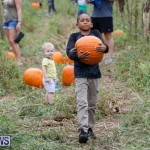J&J Produce Pumpkin Picking Bermuda, October 14 2017_6146