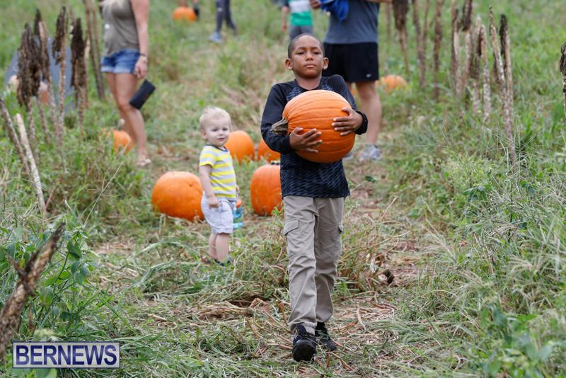 JJ-Produce-Pumpkin-Picking-Bermuda-October-14-2017_6146