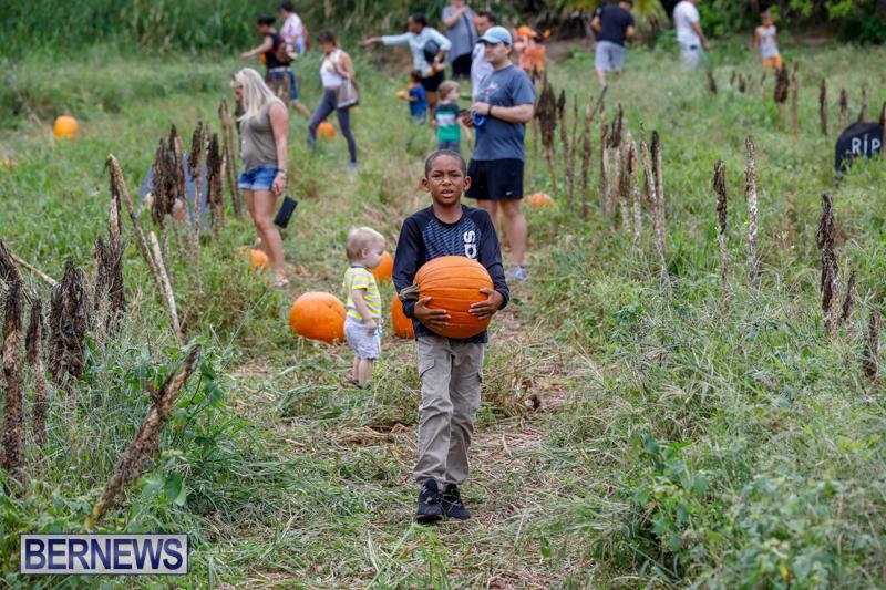 JJ-Produce-Pumpkin-Picking-Bermuda-October-14-2017_6147