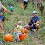 J&J Produce Pumpkin Picking Bermuda, October 14 2017_6148