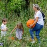 J&J Produce Pumpkin Picking Bermuda, October 14 2017_6160