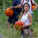 J&J Produce Pumpkin Picking Bermuda, October 14 2017_6178