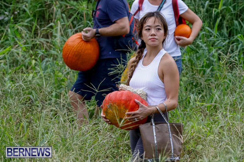 JJ-Produce-Pumpkin-Picking-Bermuda-October-14-2017_6178