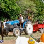 J&J Produce Pumpkin Picking Bermuda, October 14 2017_6180
