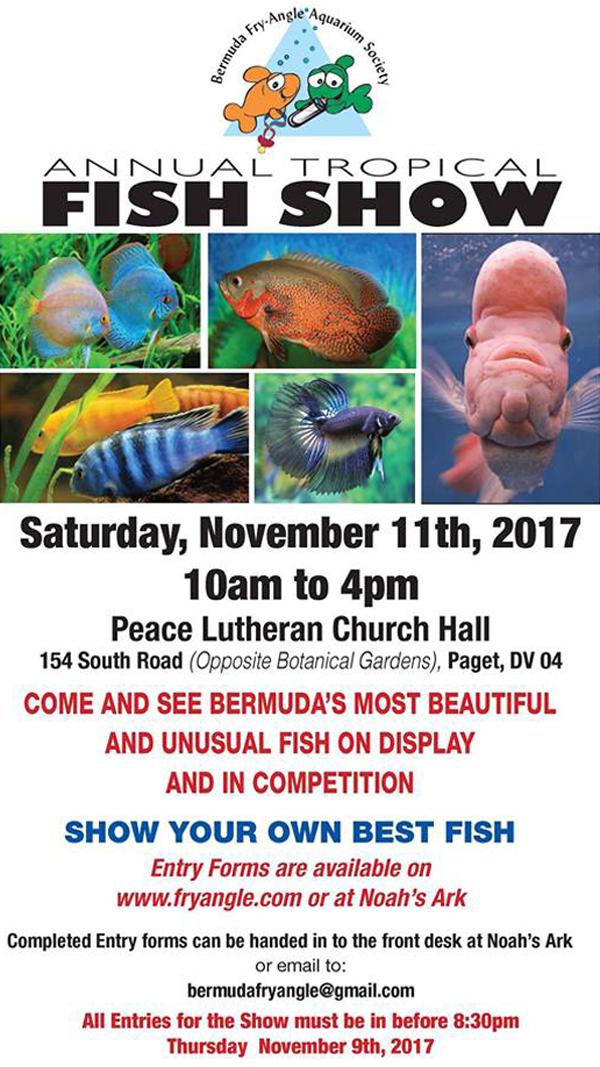 fish show Bermuda Oct 29 2017