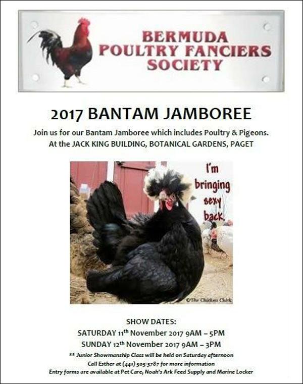 Bantam Jambouree Bermuda November 2017