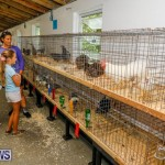 Bermuda Poultry Fanciers Society's Bantam Jamboree, November 11 2017_6344