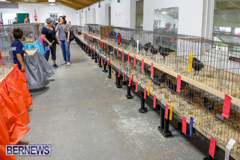 Bermuda-Poultry-Fanciers-Society's-Bantam-Jamboree-November-11-2017_6480