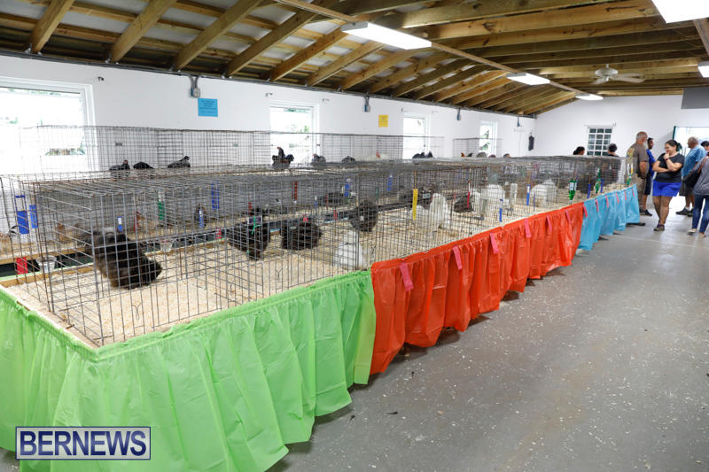 Bermuda-Poultry-Fanciers-Society's-Bantam-Jamboree-November-11-2017_6487