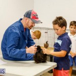 Bermuda Poultry Fanciers Society's Bantam Jamboree, November 11 2017_6492
