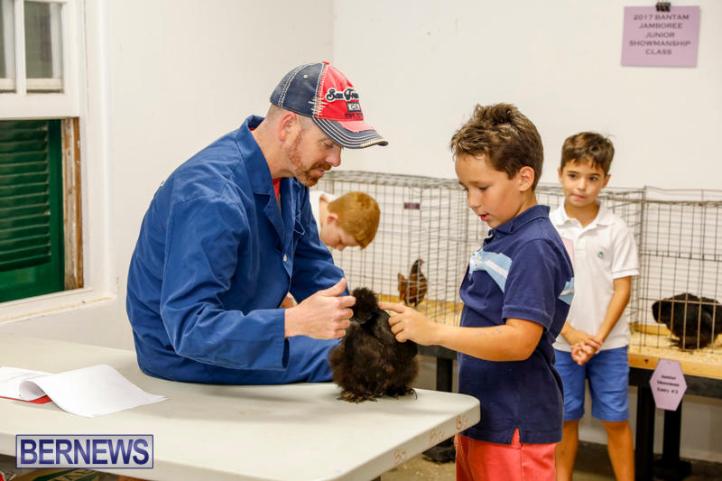 Bermuda-Poultry-Fanciers-Society's-Bantam-Jamboree-November-11-2017_6492
