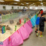 Bermuda Poultry Fanciers Society's Bantam Jamboree, November 11 2017_6505