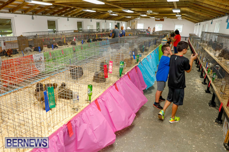 Bermuda-Poultry-Fanciers-Society's-Bantam-Jamboree-November-11-2017_6505