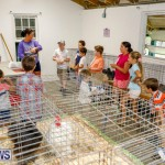 Bermuda Poultry Fanciers Society's Bantam Jamboree, November 11 2017_6564