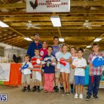 Bermuda Poultry Fanciers Society's Bantam Jamboree, November 11 2017_6580