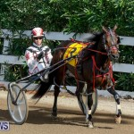 Harness Pony Racing Bermuda, November 13 2017_7491