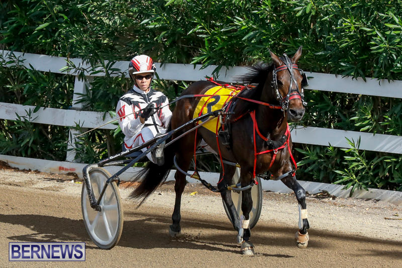 Harness-Pony-Racing-Bermuda-November-13-2017_7491