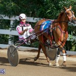 Harness Pony Racing Bermuda, November 13 2017_7495