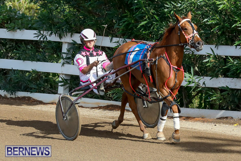 Harness-Pony-Racing-Bermuda-November-13-2017_7495