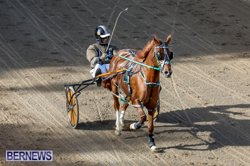 Harness-Pony-Racing-Bermuda-November-13-2017_7509