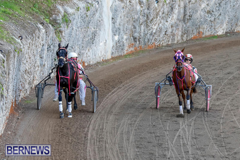 Harness-Pony-Racing-Bermuda-November-13-2017_7533