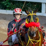 Harness Pony Racing Bermuda, November 13 2017_7715