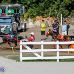Harness Pony Racing Bermuda, November 13 2017_7746