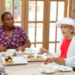 Seniors Tea Bermuda, November 8 2017_4499