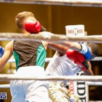 Undefeated Boxing Bermuda, November 11 2017_6958