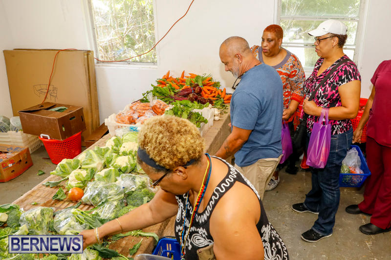 Bermuda-Farmers-Market-at-Botanical-Gardens-December-2-2017_2701