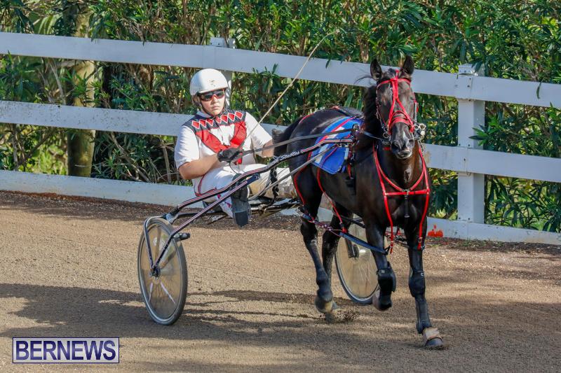 Harness-Pony-Racing-Bermuda-December-26-2017-8149