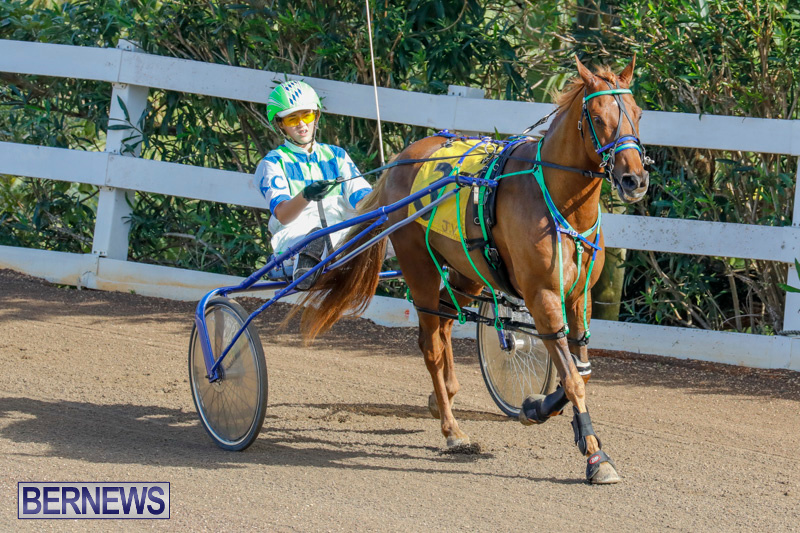 Harness-Pony-Racing-Bermuda-December-26-2017-8153