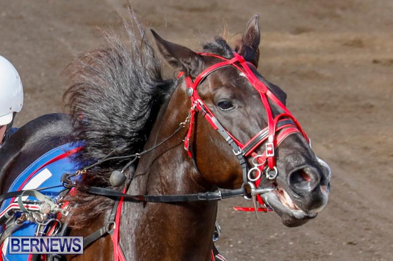 Harness-Pony-Racing-Bermuda-December-26-2017-8195