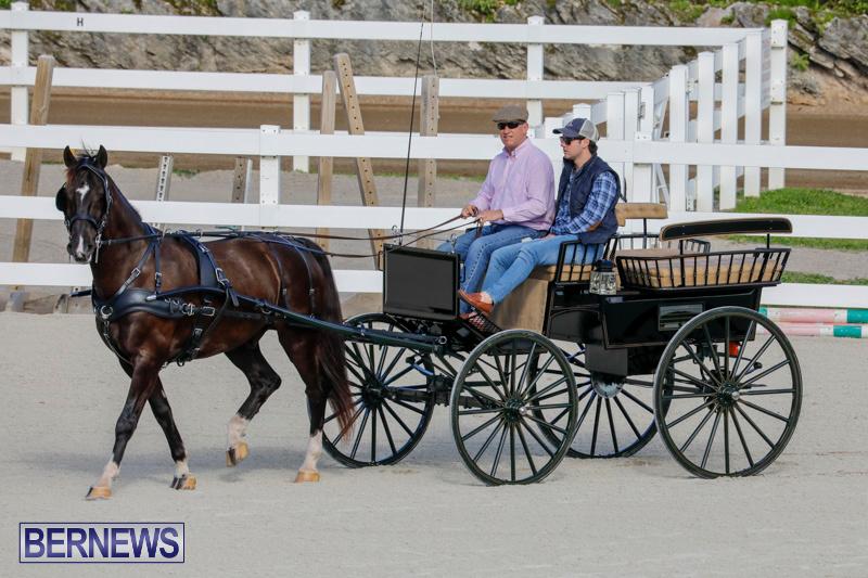 Harness-Pony-Racing-Bermuda-December-26-2017-8239