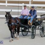 Harness Pony Racing Bermuda, December 26 2017-8243