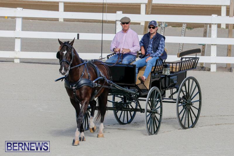 Harness-Pony-Racing-Bermuda-December-26-2017-8243