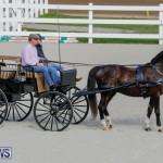 Harness Pony Racing Bermuda, December 26 2017-8256