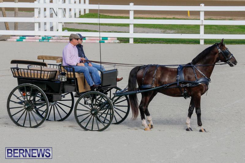 Harness-Pony-Racing-Bermuda-December-26-2017-8256