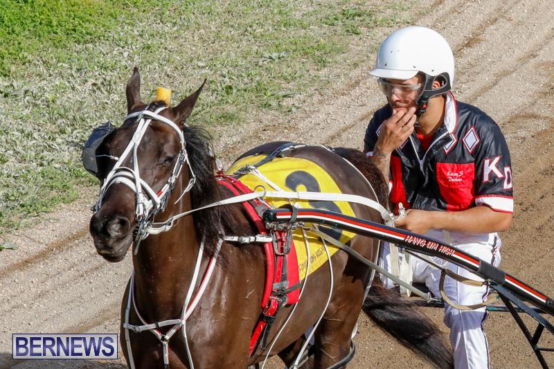 Harness-Pony-Racing-Bermuda-December-26-2017-8381
