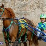Harness Pony Racing Bermuda, December 26 2017-8412