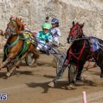 Harness Pony Racing Bermuda, December 26 2017-8440