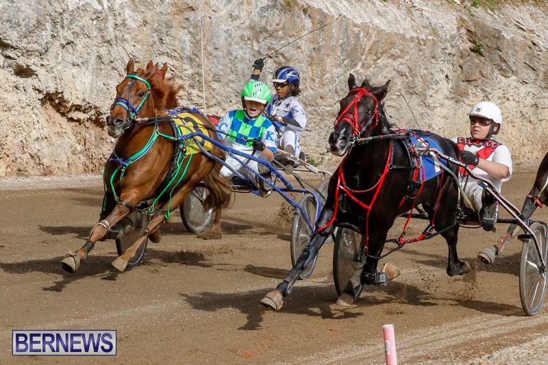 Harness-Pony-Racing-Bermuda-December-26-2017-8440
