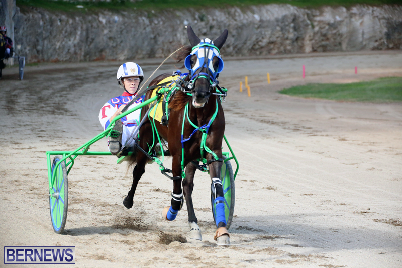 Horses-Bermuda-Dec-20-2017-12
