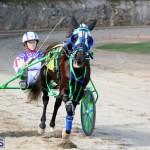 Horses Bermuda Dec 20 2017 (13)