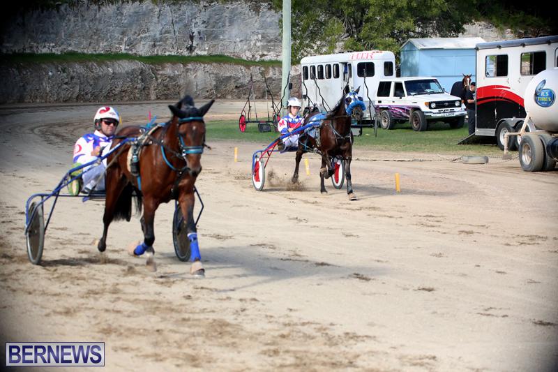 Horses-Bermuda-Dec-20-2017-14