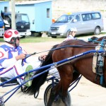 Horses Bermuda Dec 20 2017 (15)