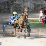 Horses Bermuda Dec 20 2017 (18)