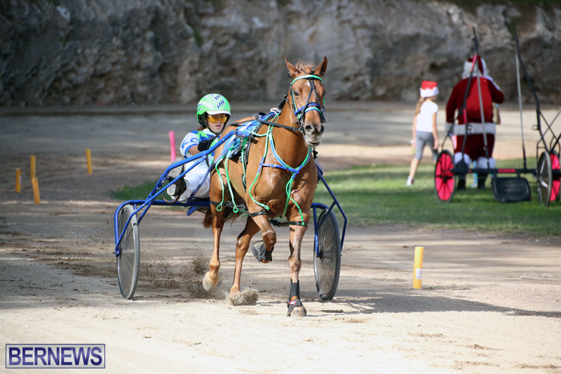 Horses-Bermuda-Dec-20-2017-18